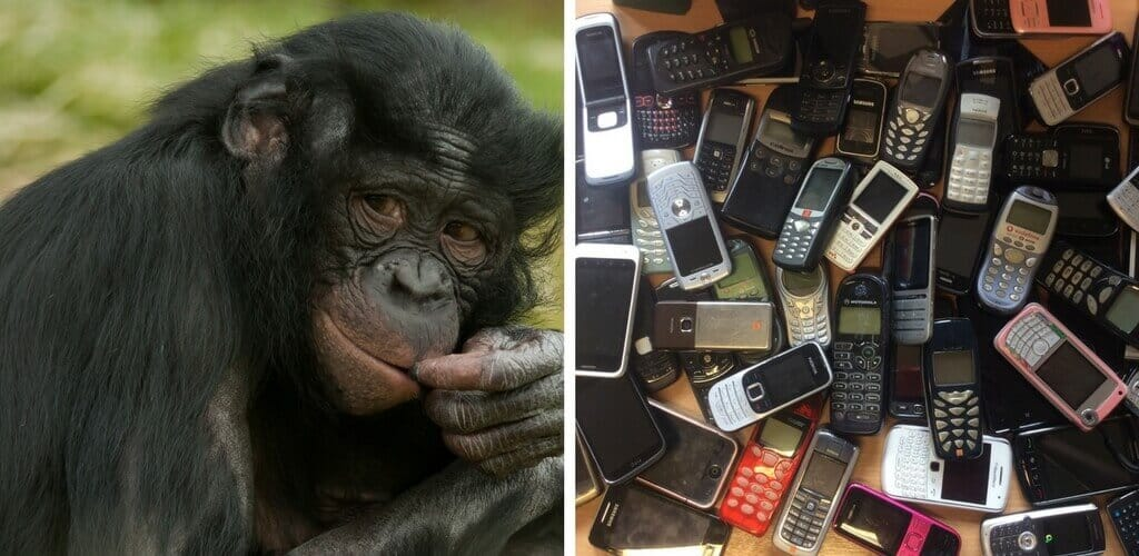 Mobiles and Chimps