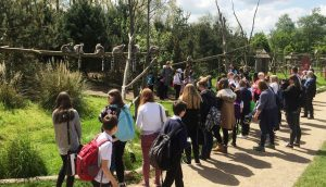Twycross Zoo Lemur Walkthrough