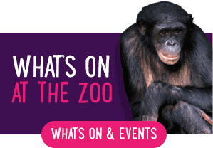 Whats on at the Zoo