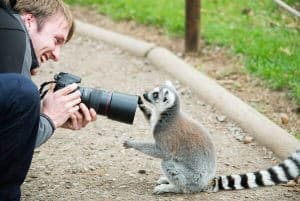 Lemur Photography - Alex W
