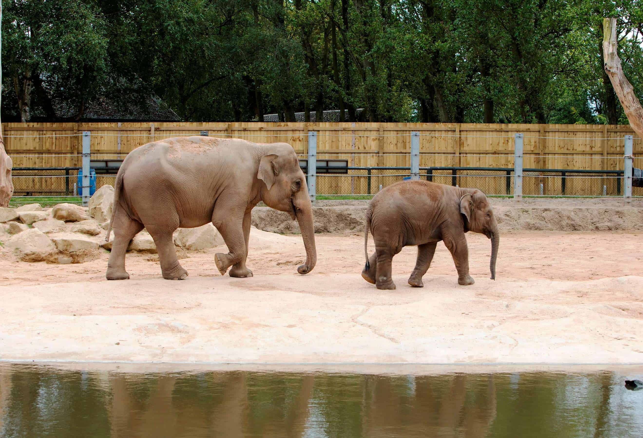 The elephants  at Twycross Zoo.Photographs: Lucy Ray/Twycross Zoo