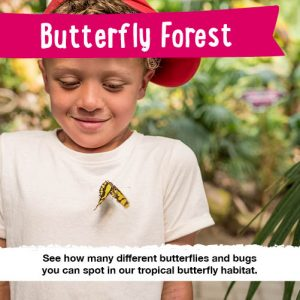 butterfly forest