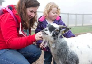 Pet the goats in Explorer Zone