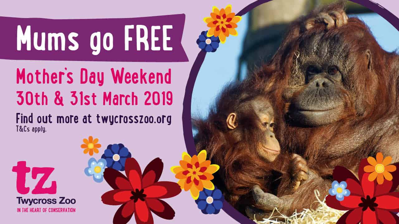 Shop with our Twycross Zoo discounts and offers.