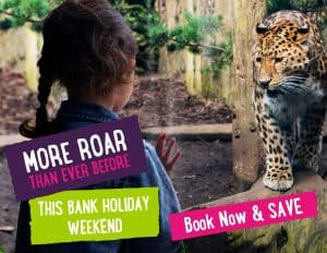 Roar bank holiday banner