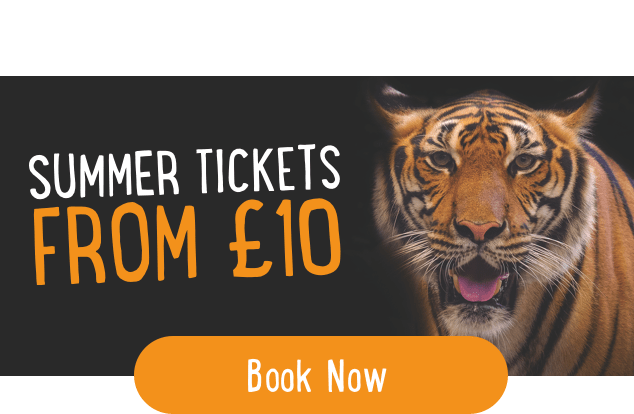 Tickets from £10