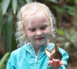 Explore Butterfly Forest with toddlers