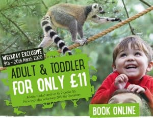 Adult and toddler offer March 2020